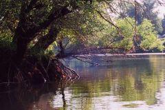 A Hárosi öböl nyáron, Gönczi János